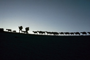 Caravans of the Himalaya 1 by Eric Valli