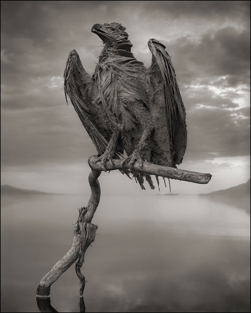 Calcified Fish Eagle by Nick Brandt